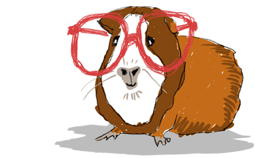 Guinea pig with specs